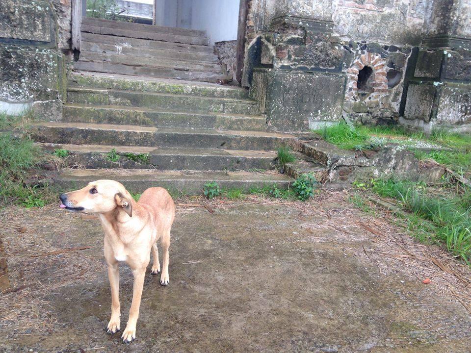 Cão Guardião